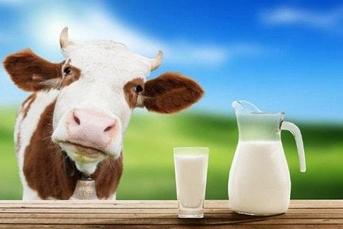 ประโยชน์ของการดื่มนมวัวแท้  ช่วยเสริมสร้างในเรื่องของกระดูกและฟัน
