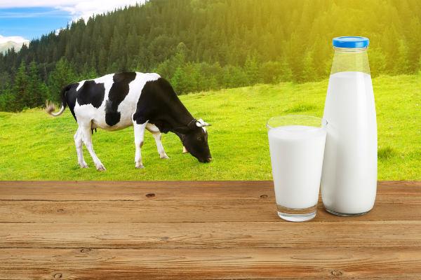 เครื่องดื่มทดแทนนม