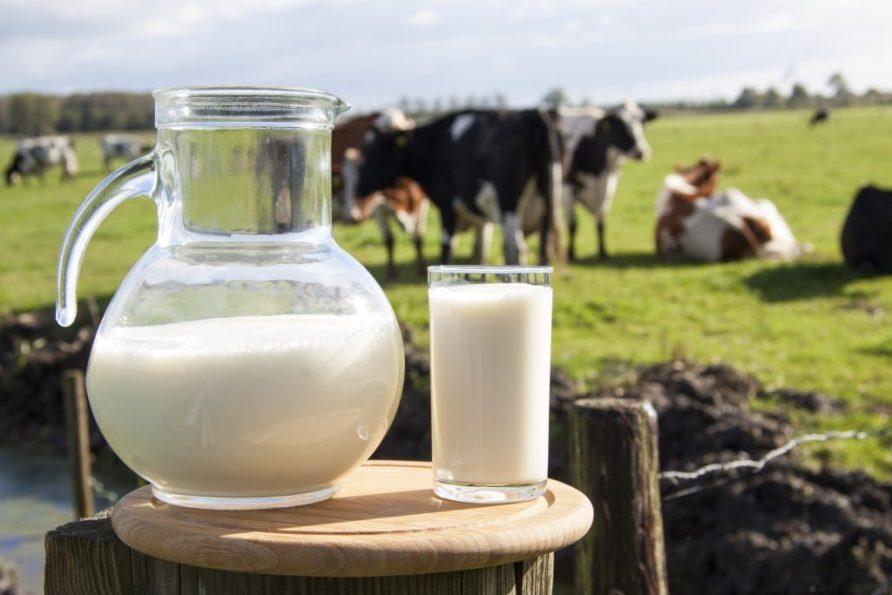 ประโยชน์ของการดื่มนมวัวแท้
