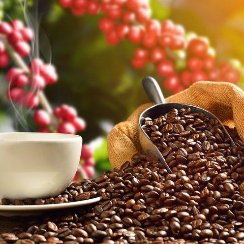 ประโยชน์ของการดื่มกาแฟ